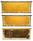 Bee frames with honey and bee brood. Isolated on a white background stock photo