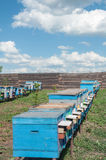 Bee-garden. Apiary with many beehives in perspective on blue sky and white clouds as background Stock Images