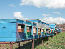 Bee-garden. Apiary with many beehives in perspective on blue sky and white clouds as background Royalty Free Stock Image
