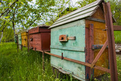 Bee-garden. Apiary.Bee-garden surrounded by green garden Stock Photography