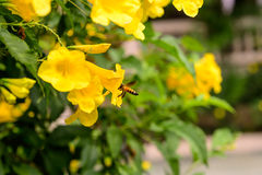 Bee in garden park Stock Photography