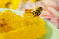 Bee gathering honey and nectar Stock Photos