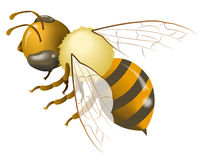 Bee gradient mesh Stock Photo