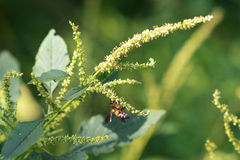 Bee and grass flower. Bee does its work under glass flower in very hot day Royalty Free Stock Photos