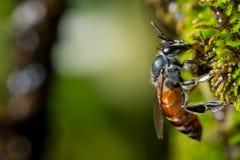 Bee on green moss Stock Photo