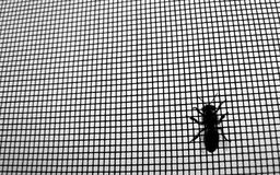 Bee hanging out in metal net Royalty Free Stock Photo