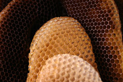 Bee hive. Natural organization of bee hive Royalty Free Stock Photos