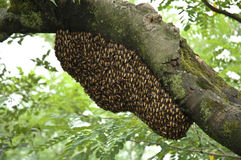 Bee Hive. A bee hive in Shimla, India royalty free stock photos