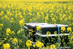 Bee hive. In flourishing meadow stock photo