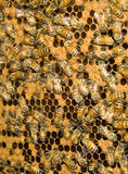 Bee hive Royalty Free Stock Photography