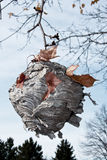 Bee hive. Nest in a tree in vertical format stock image
