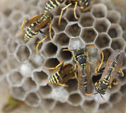 Bee hive. Bees standing on the hive Stock Photo
