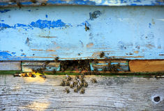 Bee hive Stock Image