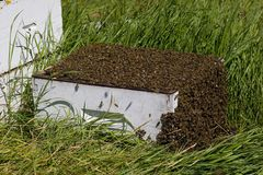 Bee hive. A bee hive overflowing with bees stock photos