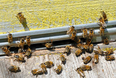 Bee hive with bees. On it stock image