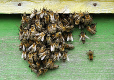 Bee hive with bees. On it royalty free stock images