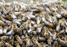 Bee hive with bees. On it stock photo