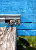 Bee hive with bees Royalty Free Stock Photography