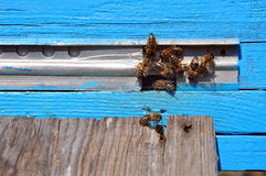 Bee hive with bees Stock Images