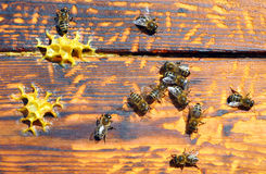 Bee hive with bees on it Royalty Free Stock Photography