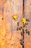 Bee hive with bees on it Royalty Free Stock Photos