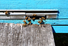 Bee hive with bees on it Stock Photography