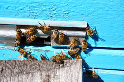 Bee hive with bees on it Royalty Free Stock Image