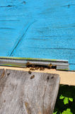 Bee hive with bees on it Stock Photo