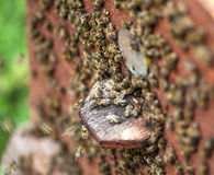 Bee hive. Big group of bees on the bee hive closeup stock photo