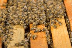Bee hive Stock Image