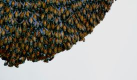 A bee hive - closeup royalty free stock photography