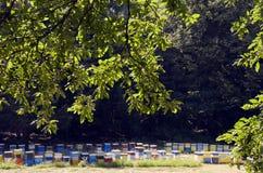 Bee hive Stock Photos