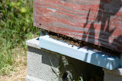 Bee hive in garden Royalty Free Stock Image