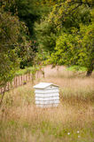 Bee hive in garden Stock Photography