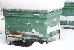Bee hive hibernating. Bee hive in the wintertime covered by snow Stock Images