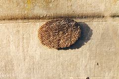 Bee hive Royalty Free Stock Image