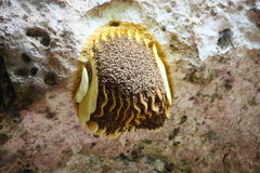 Bee hive. With many bees Royalty Free Stock Photos