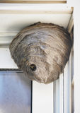 Bee Hive Nest Hanging from House. A huge bee hive nest is hanging from a house with bees coming in and out for a pest control or allergy concept royalty free stock photo
