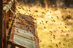 Bee hive. Old wooden bee hive in the countryside Stock Photo