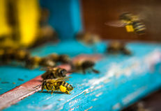 bee hive Stock Photo