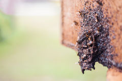 Bee Hive's Entrance Royalty Free Stock Photo