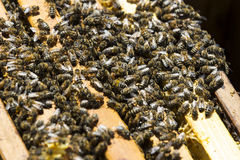 The bee hive is shot close-up Royalty Free Stock Photo