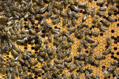 The bee hive is shot close-up Royalty Free Stock Image