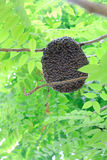 Bee hive on tree. Bee hive swarming on tree stock photography