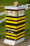 Bee Hive. A yellow and black striped bee hive box royalty free stock images