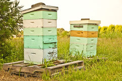 Free Bee Hives Stock Images - 10050624