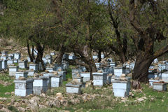 Bee Hives. On the island of Kefalonia, Greece royalty free stock photo