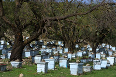 Bee Hives. On the island of Kefalonia, Greece royalty free stock image