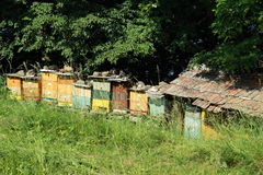 Bee-hives. Colorful beehives by a wood stock photography