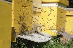 Bee hives Stock Photos
